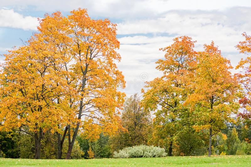 Landscape with yellow autumn trees stock photography