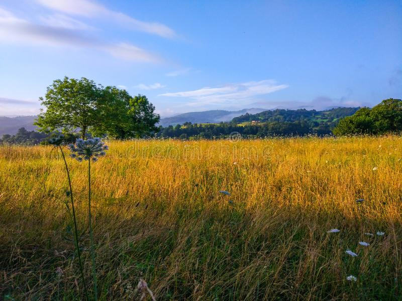 Landscape with yellow grass and trees at background, and defocused flower at foreground royalty free stock image