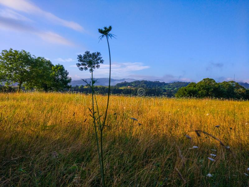 Landscape with yellow grass and trees at background, and defocused flower at foreground stock photo