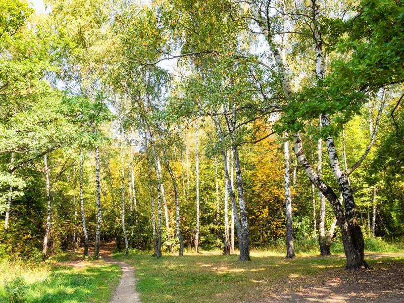 Landscape with yellowing birch grove in city park. Landscape with yellowing birch grove in green city park on sunny autumn day stock photos