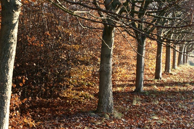 Landscape01 danese fotografia stock libera da diritti