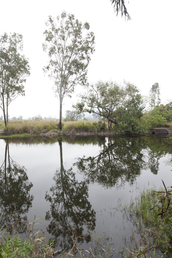 landscape013 arkivfoto