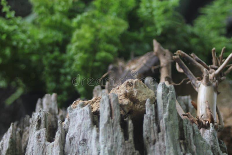 landscaped stockfotografie