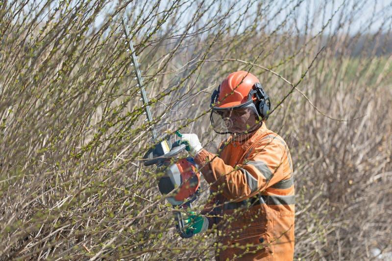 Landscaper profissional Worker em arbustos de poda do uniforme e da máscara com equipamento do ajustador de conversão imagens de stock