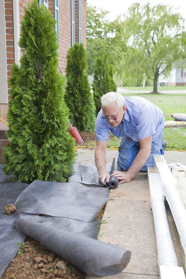 Landscaper que planta árvores fotos de stock