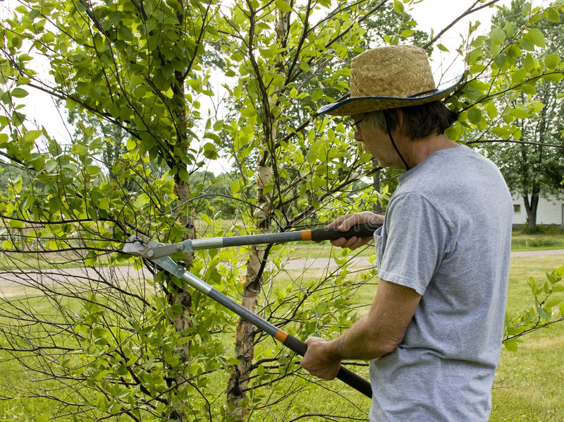 Landscaper Trimming Trees Stock Photo