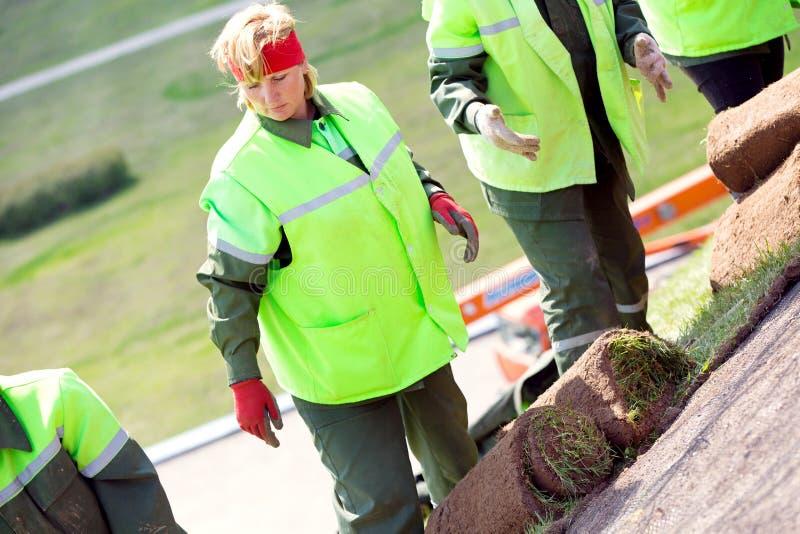 Landscapersarbetare som lägger gräsmark rullande grästorva royaltyfri bild
