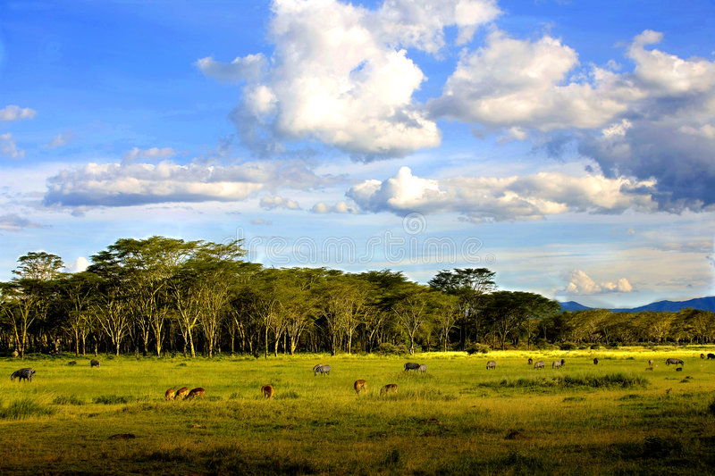 Download Landscapes of Nakuru stock image. Image of meadows, place - 4050621