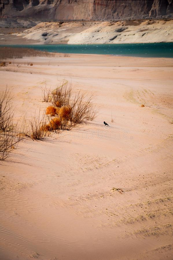 Bird on the Beach of Lake Powell stock images