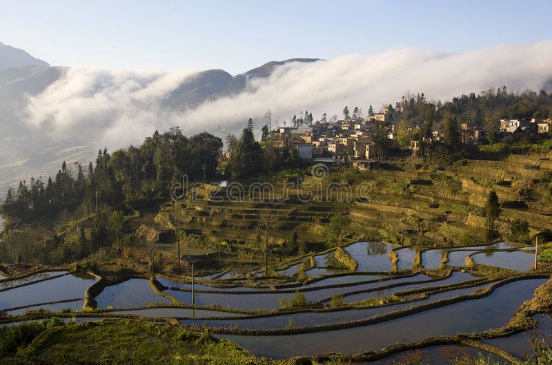 Download Landscapes of Yuanyang stock image. Image of trees, line - 4524891