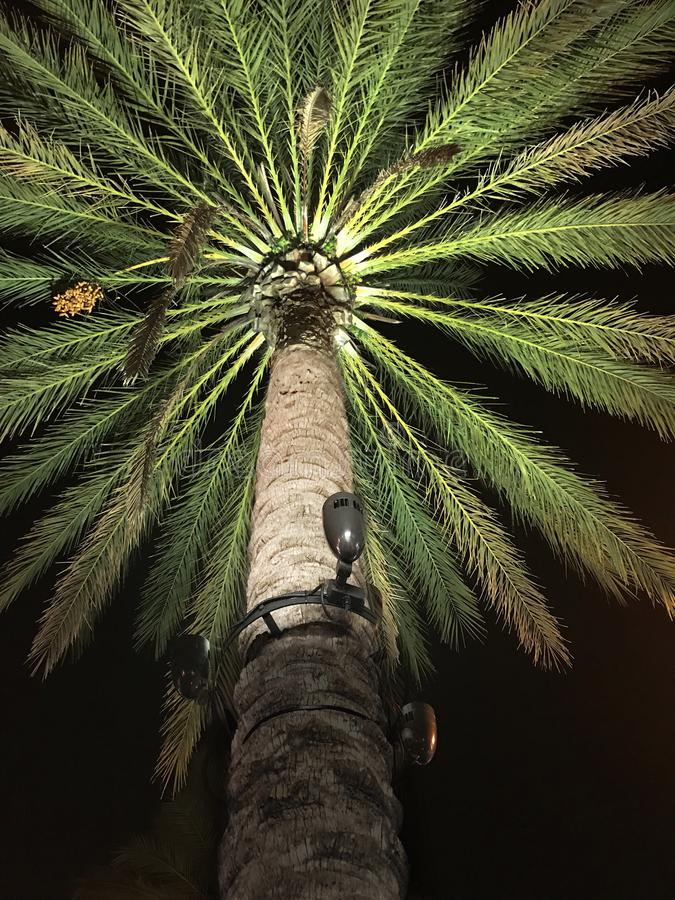 Landscaping Night Lighting On A Palm Tree. Landscaping night lights, lighting on a large palm tree royalty free stock photos