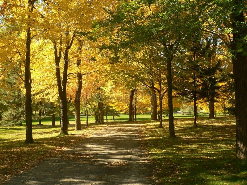 Landscaspe do outono no parque mim fotografia de stock