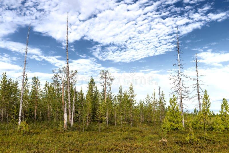 Landschaft auf der Yamal-Halbinsel in Sibirien lizenzfreies stockbild