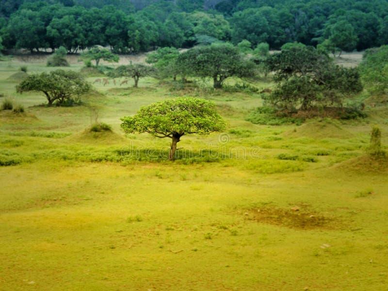 Landschaft background lizenzfreie stockfotos