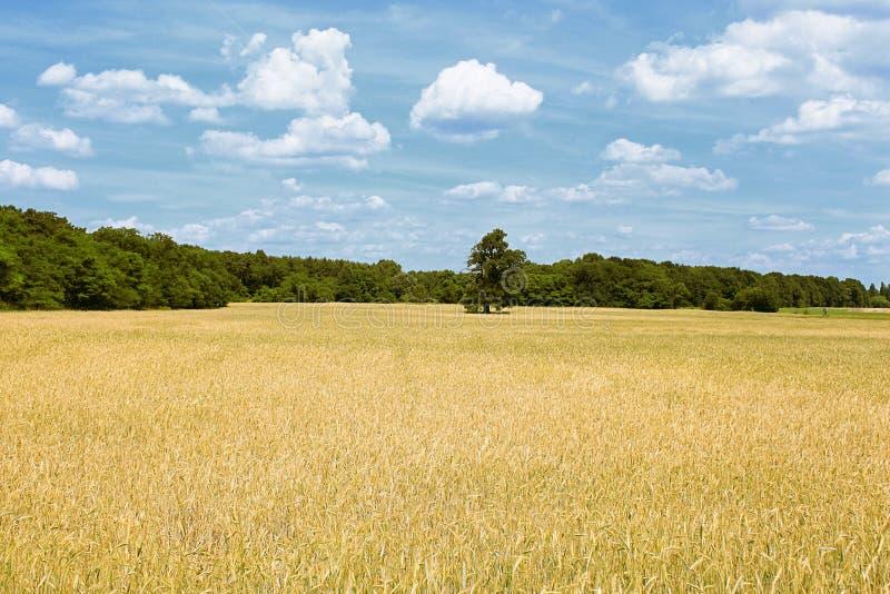 Landschaft in Brandenburg (Deutschland) stockfoto