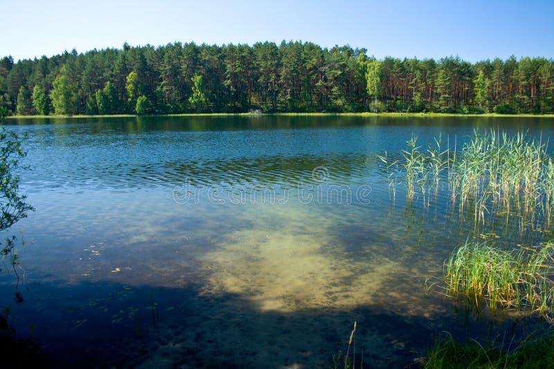 Landschaft in dem See stockbilder