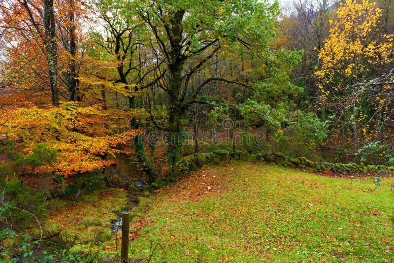 Landschaft in den Herbstfarben stockbilder
