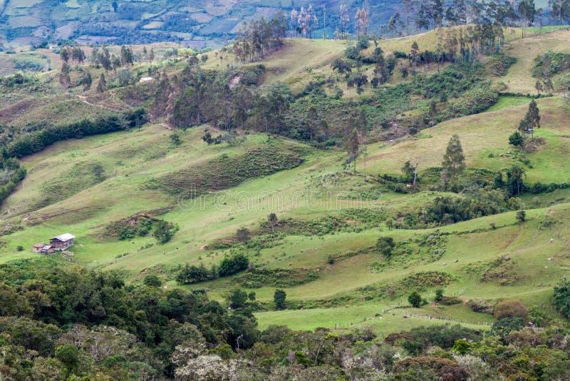 Landschaft in den Wolkenwaldbergen lizenzfreie stockbilder