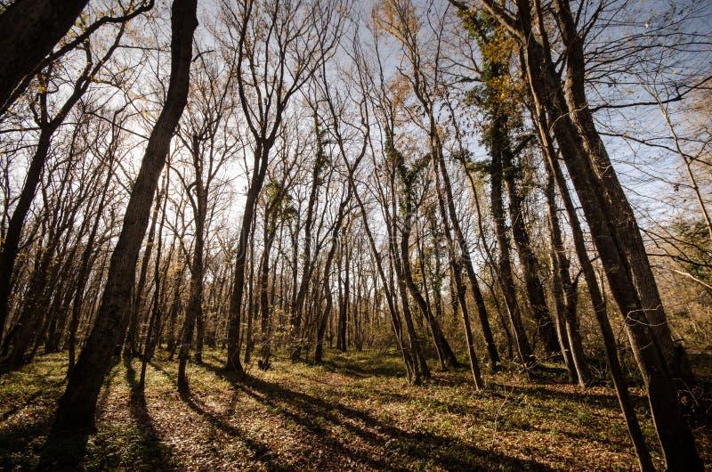 Landschaft der Asphaltstraße weg durchlaufend in die Gebirgspässe die Bäume, die Dörfer und die Waldplätze oder ländliche Orte vo lizenzfreie stockfotos
