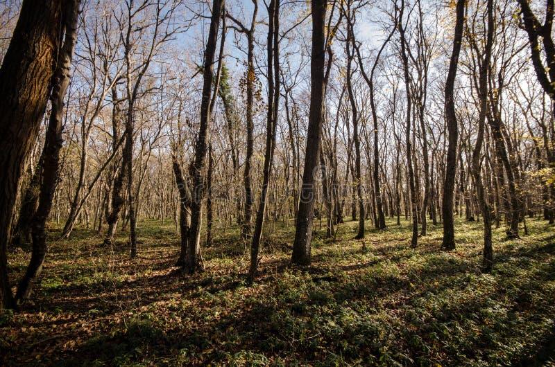 Landschaft der Asphaltstraße weg durchlaufend in die Gebirgspässe die Bäume, die Dörfer und die Waldplätze oder ländliche Orte vo stockfotos
