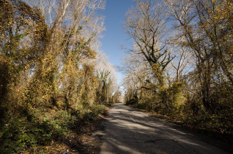 Landschaft der Asphaltstraße weg durchlaufend in die Gebirgspässe die Bäume, die Dörfer und die Waldplätze oder ländliche Orte vo lizenzfreie stockfotografie