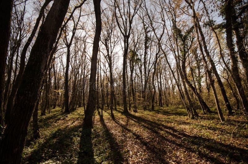 Landschaft der Asphaltstraße weg durchlaufend in die Gebirgspässe die Bäume, die Dörfer und die Waldplätze oder ländliche Orte vo stockfoto