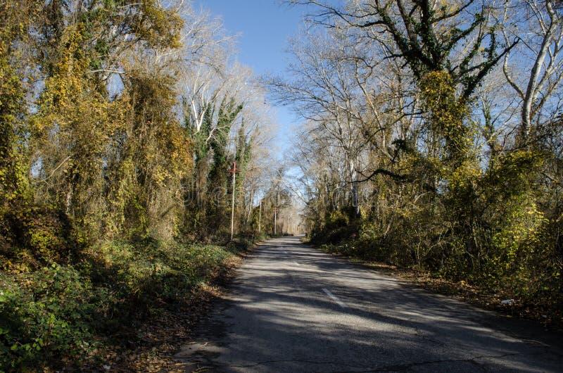 Landschaft der Asphaltstraße weg durchlaufend in die Gebirgspässe die Bäume, die Dörfer und die Waldplätze oder ländliche Orte vo stockbild