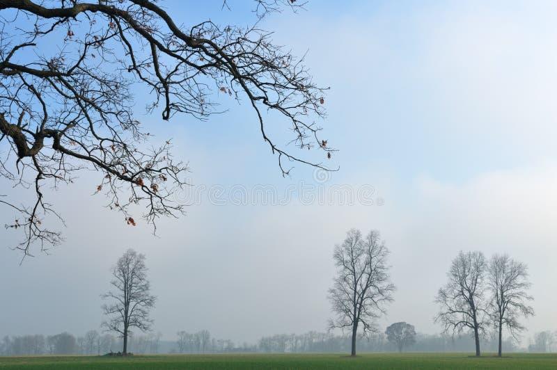 Landschaft der bloßen Bäume lizenzfreie stockfotografie