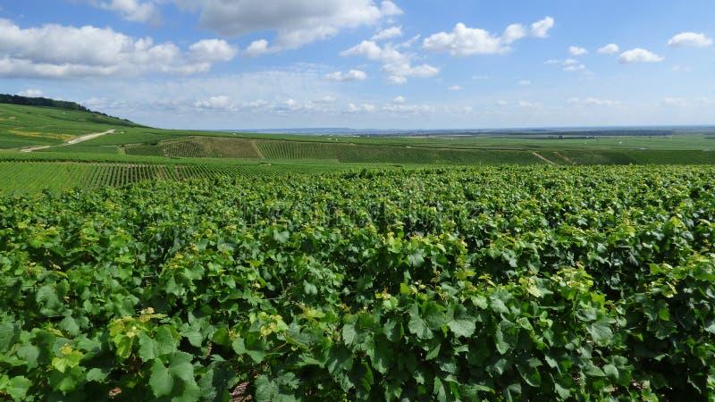 Landschaft in der Champagnerregion stockbilder