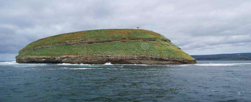 Landschaft der Insel, in der die Papageientaucher in Skjalfandi-Bucht in Nord-Island leben stockfotos