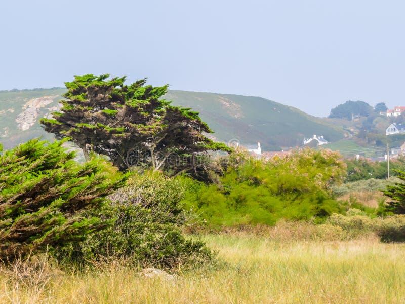 Landschaft der Jersey-Insel stockfotos