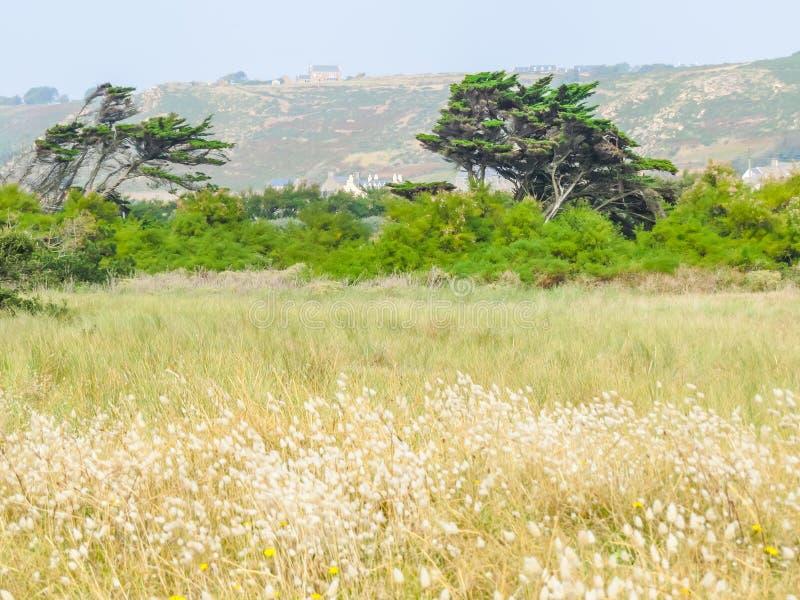 Landschaft der Jersey-Insel stockbild