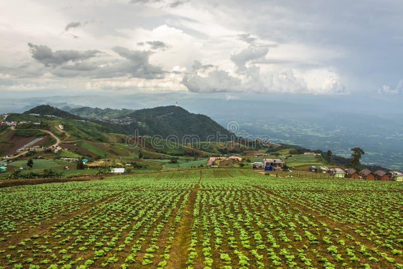 Landschaft der landwirtschaftlicher Nutzfläche auf Berg, in Thailand stockbild