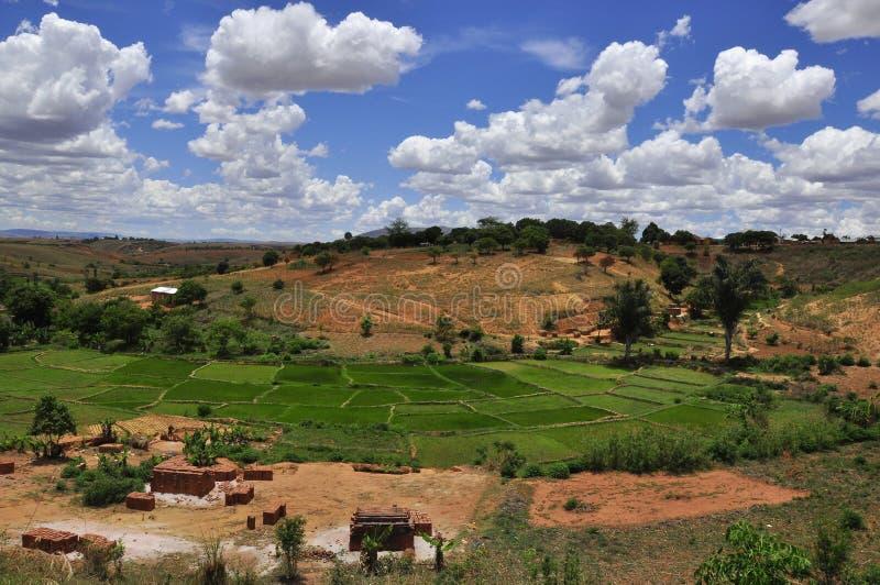 Landschaft der Reisfelder in Madagaskar stockbild