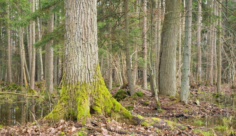 Landschaft des alten Waldes und des Wassers lizenzfreie stockfotografie
