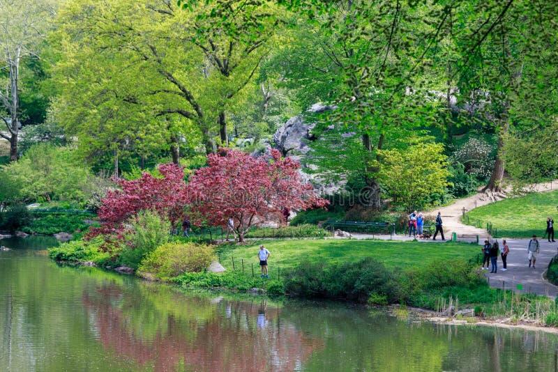 Landschaft des Central Park am Frühling in NYC stockbild