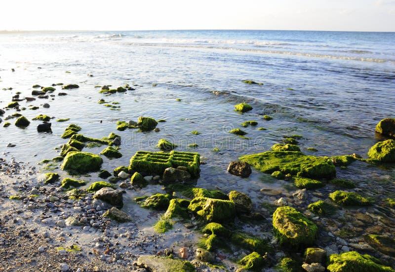Landschaft des felsigen Strandes stockbild