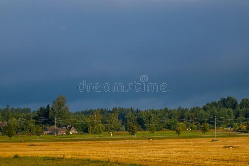 Landschaft des gelben Getreidefelds und des blauen Himmels lizenzfreies stockbild