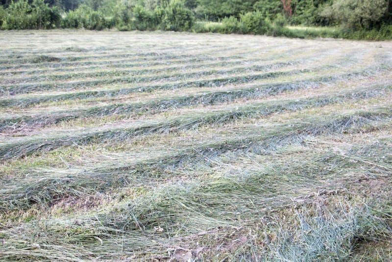 Landschaft des gemähten Grases lizenzfreie stockfotos