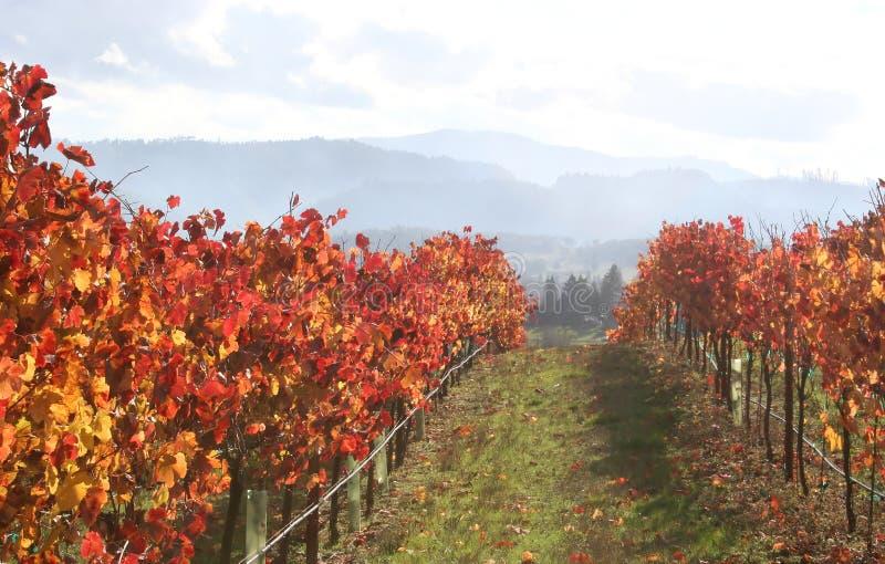 Landschaft des Herbst-Weinbergs stockfotografie