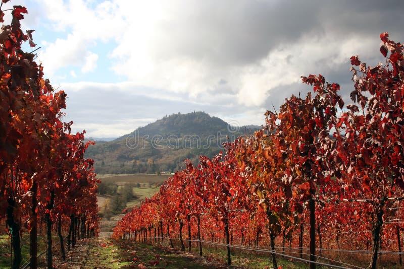 Landschaft des Herbst-Weinbergs stockbild