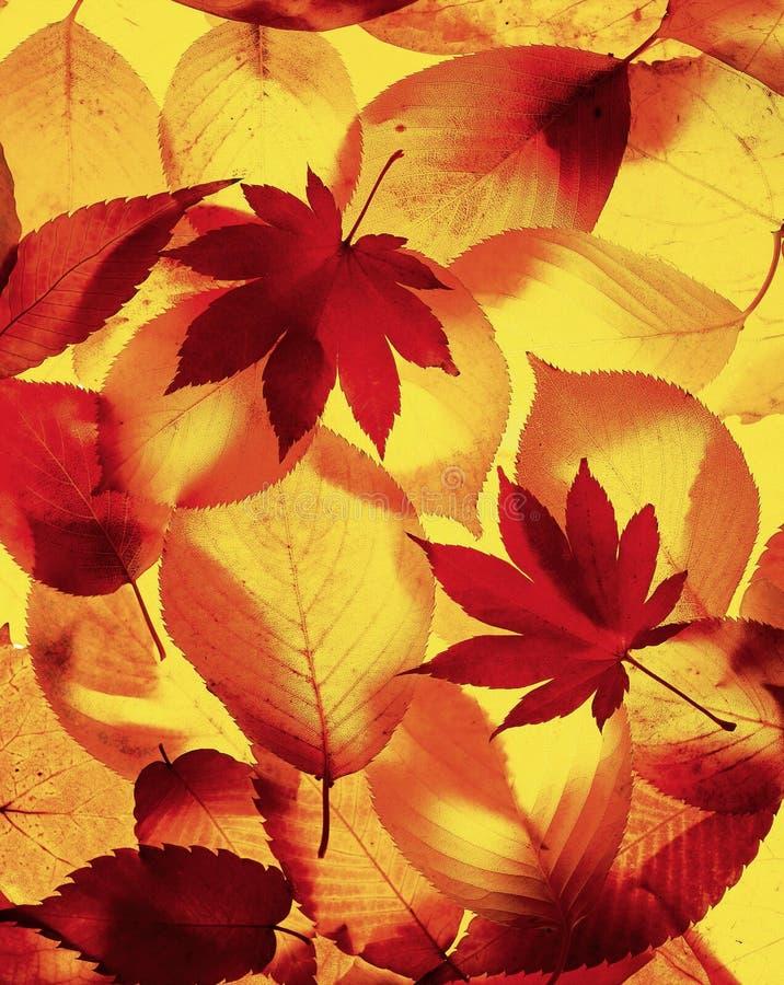 Landschaft des Herbstes lizenzfreies stockbild