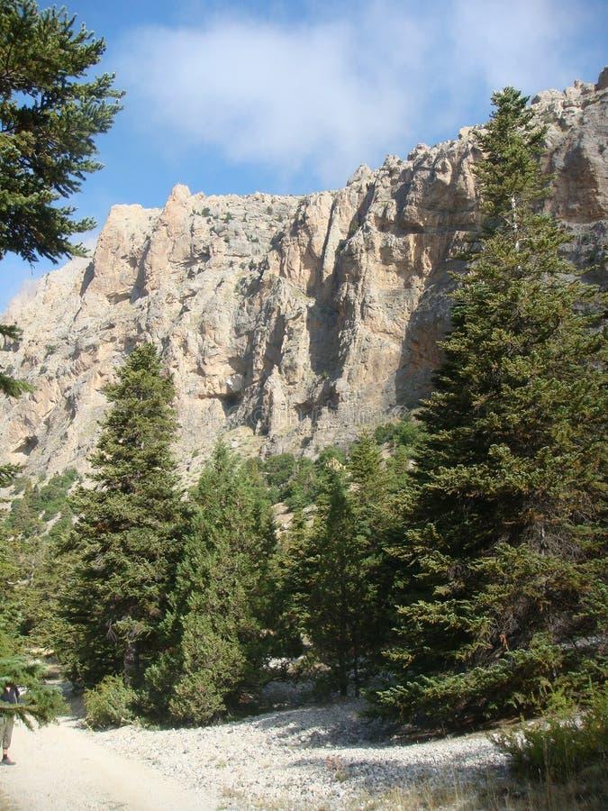 Landschaft des hohen Berges mit hohen Kiefern im Vordergrund auf dem Stier in der Türkei lizenzfreie stockbilder