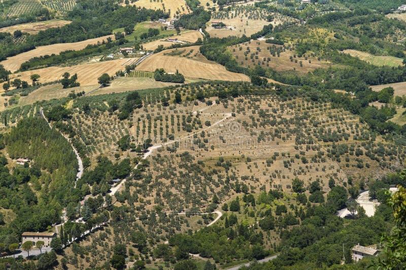 Landschaft des landwirtschaftlichen Feldes. stockbild