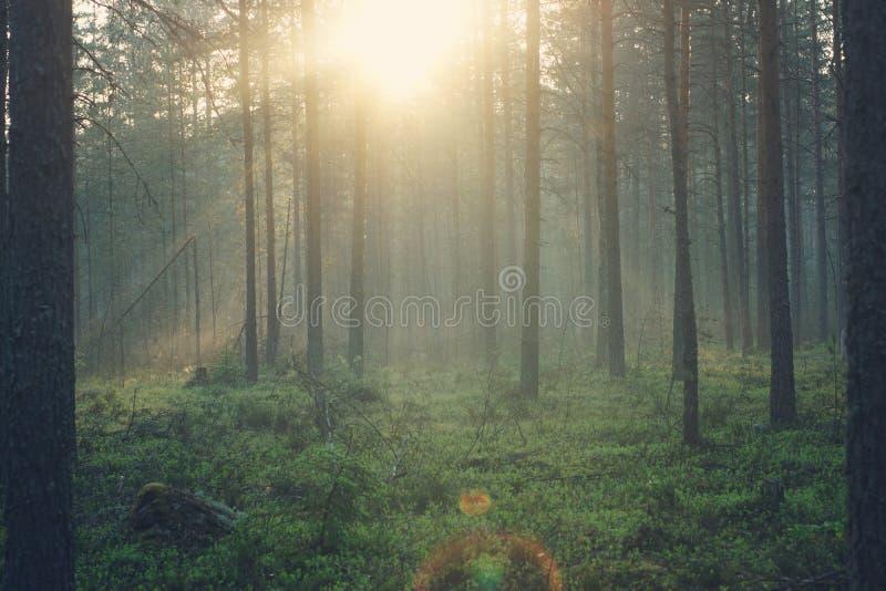 Landschaft des Morgenwaldes, im Sonnenlicht gebadet stockbilder