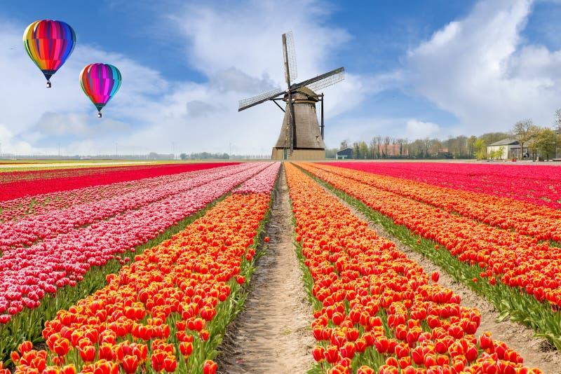 Landschaft des niederländischen Blumenstraußes der Tulpen mit Heißluft Ballon stockfoto