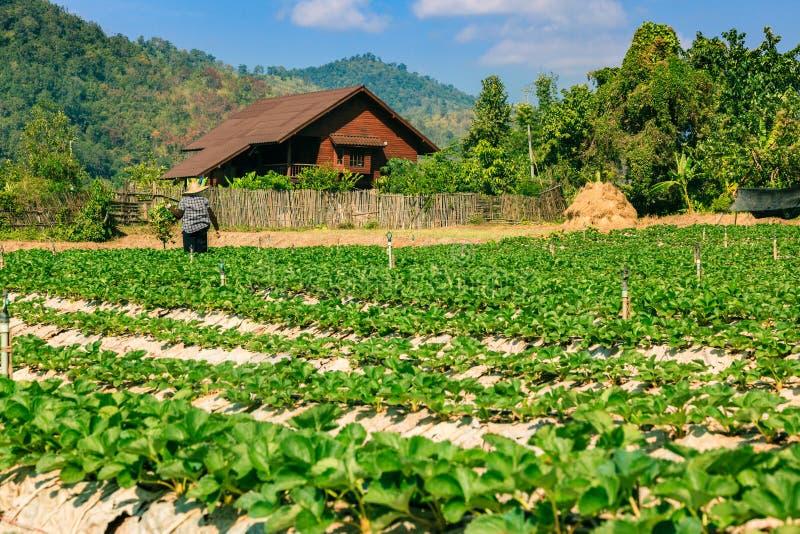 Landschaft des organischen Feldes der Landwirtschaft stockfoto