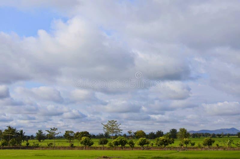 Landschaft des Reisfeldes bei Sonnenuntergang stockbilder