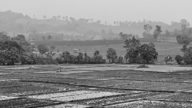 Landschaft des Reisfelds am regnerischen Tag, Schwarzweißfotografie stockfotos