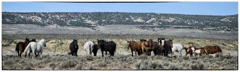 Landschaft des Sand-Waschbeckens wilde Pferde lizenzfreie stockfotos